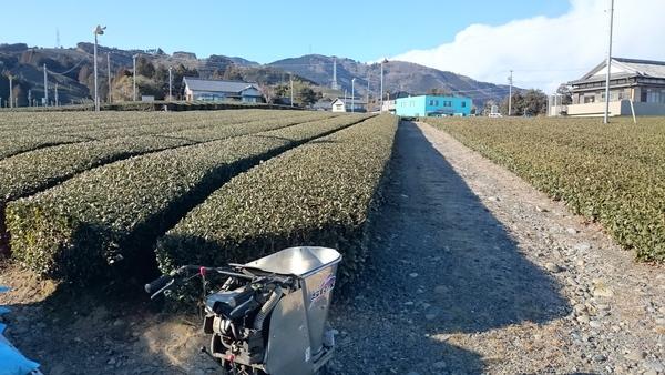 畑の手入れ(肥料ふり)