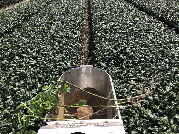 今の時期は、配合肥料撒きをしています